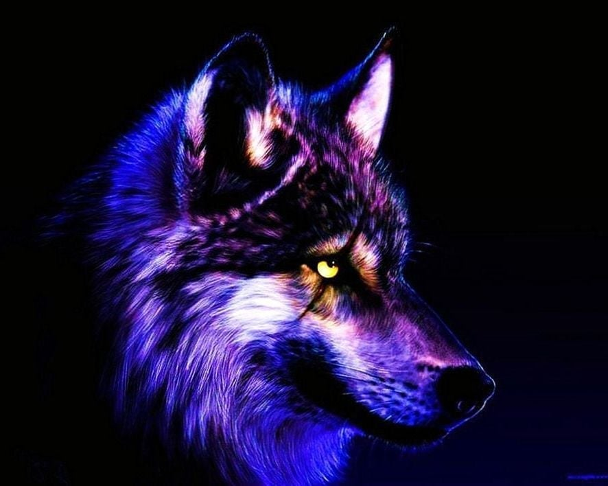 Cool Wallpapers Wolf   Cool Wolf 2963682   HD Wallpaper 886x708