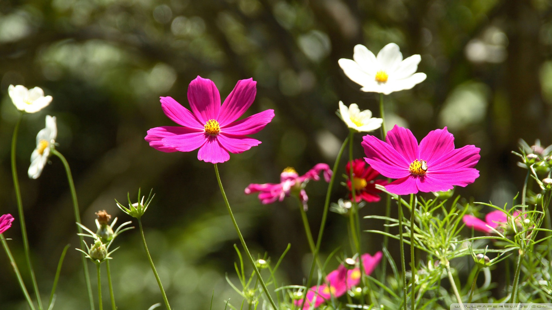 wallpapers spring flowers landscape nature wallpaper 1920x1080 1920x1080