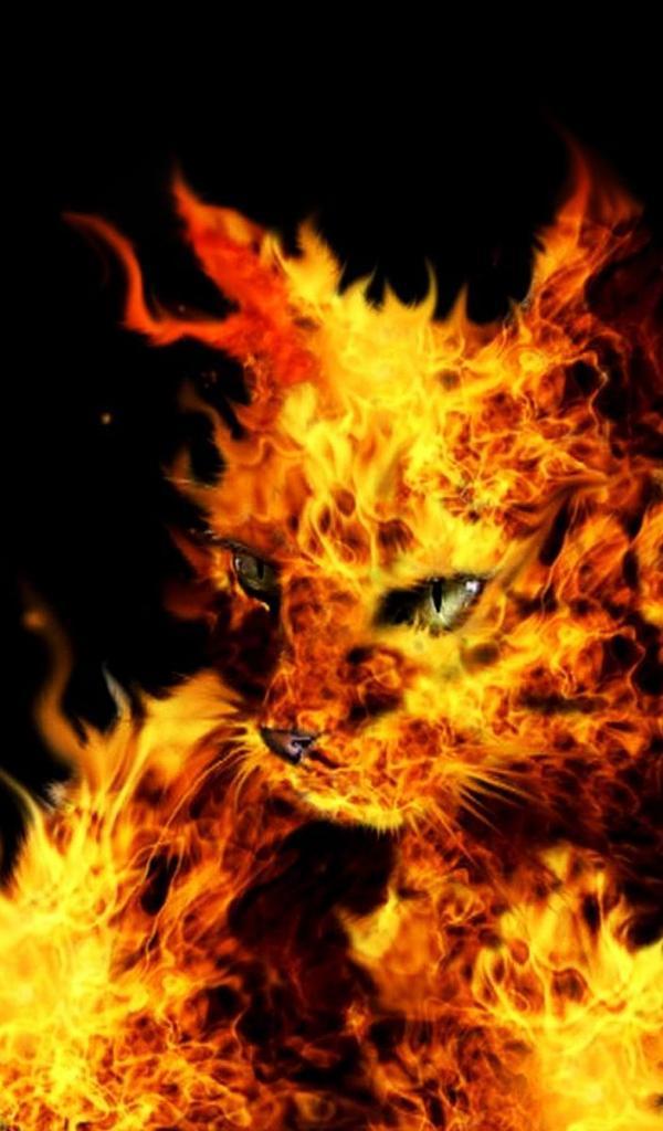 cats fire black background desktop 1920x1200 hd wallpaper 563296jpg 600x1024