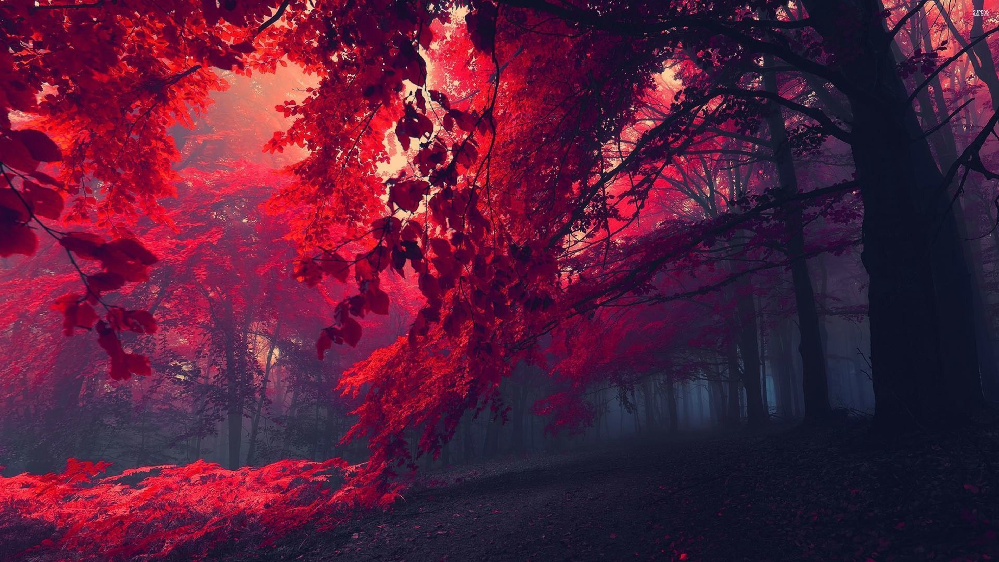 Red forest 26750 3840x2160 wallpaper 3840x2160 317502 3840x2160