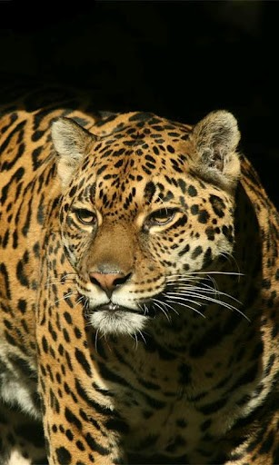 View bigger   Animals Live wallpapers for Android screenshot 307x512