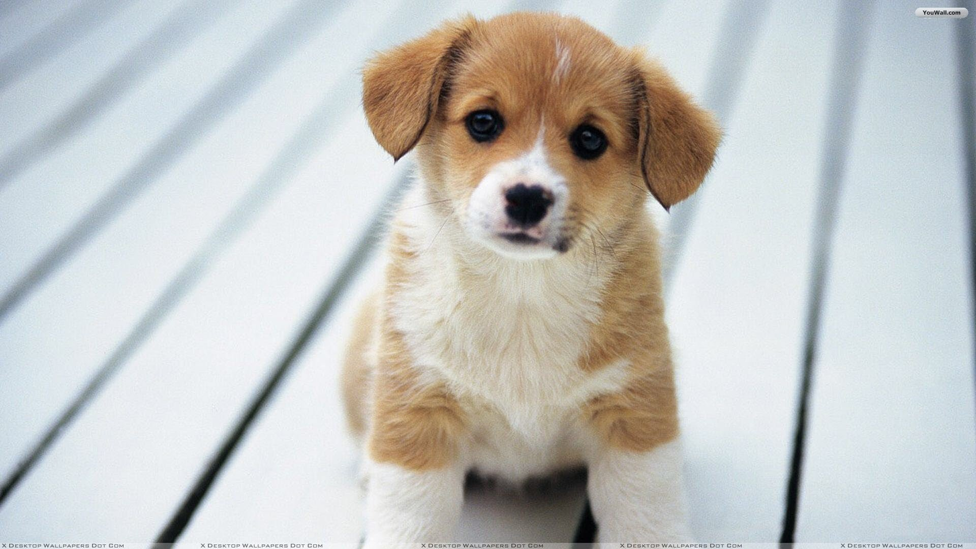 Puppy Wallpaper for Computer 53 images 1920x1080