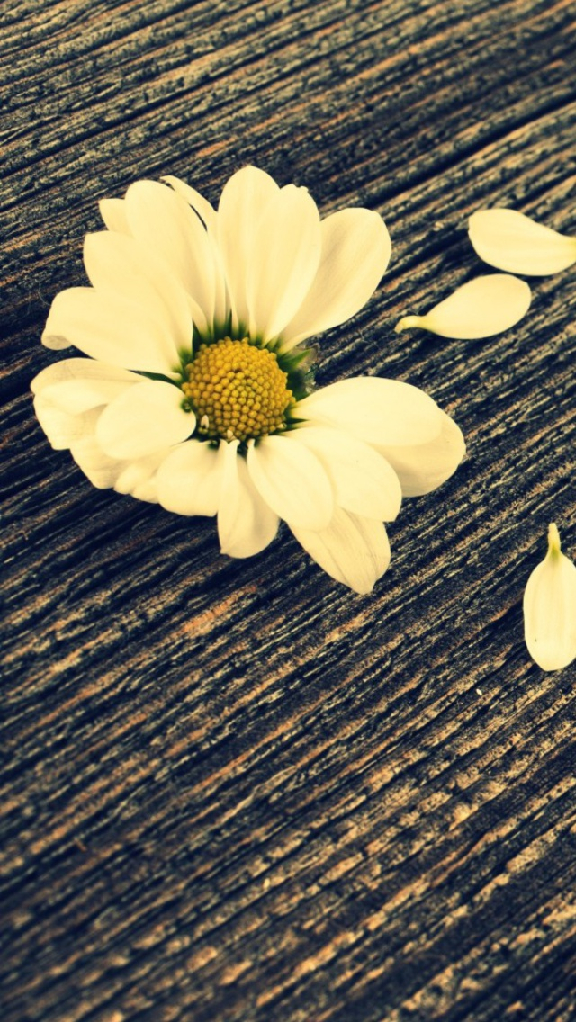 flowers more search daisy on wood iphone wallpaper tags board daisy 640x1136