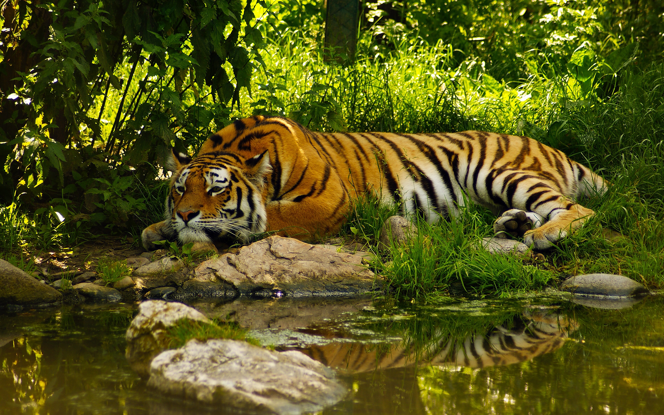 Animal Nature HD Wallpapers - WallpaperSafari