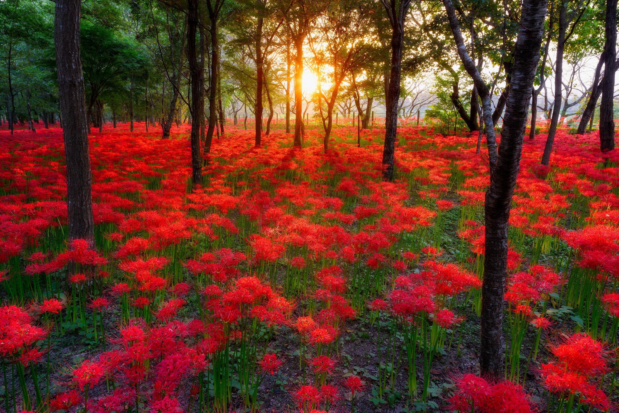 Most Beautiful Nature Wallpaper Flowers Wallpapersafari