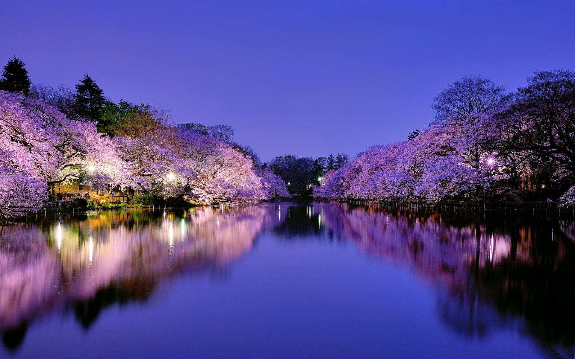 4K Nature Wallpaper Spring Japan - WallpaperSafari