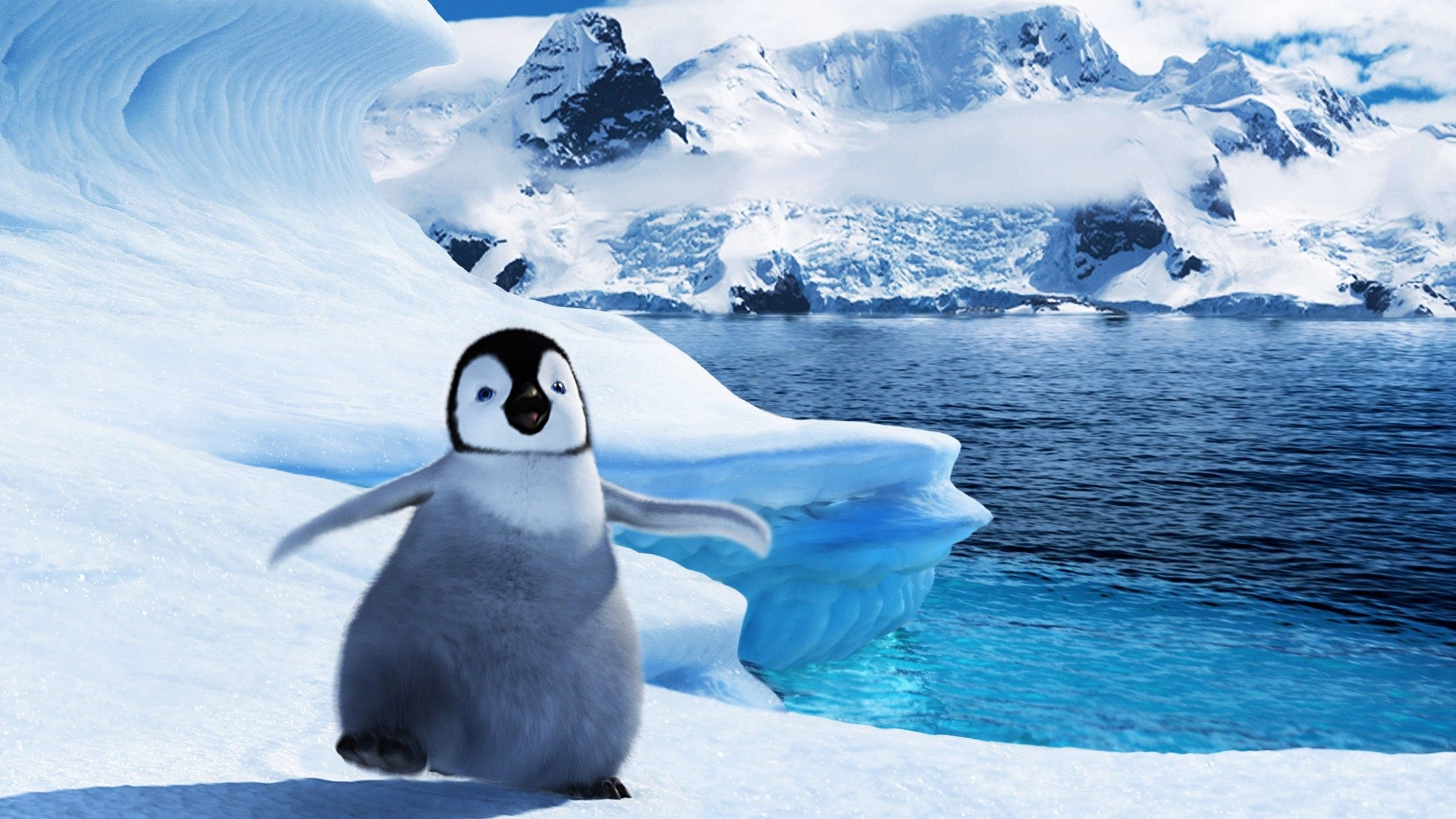 Cute Penguin Backgrounds 2560x1440