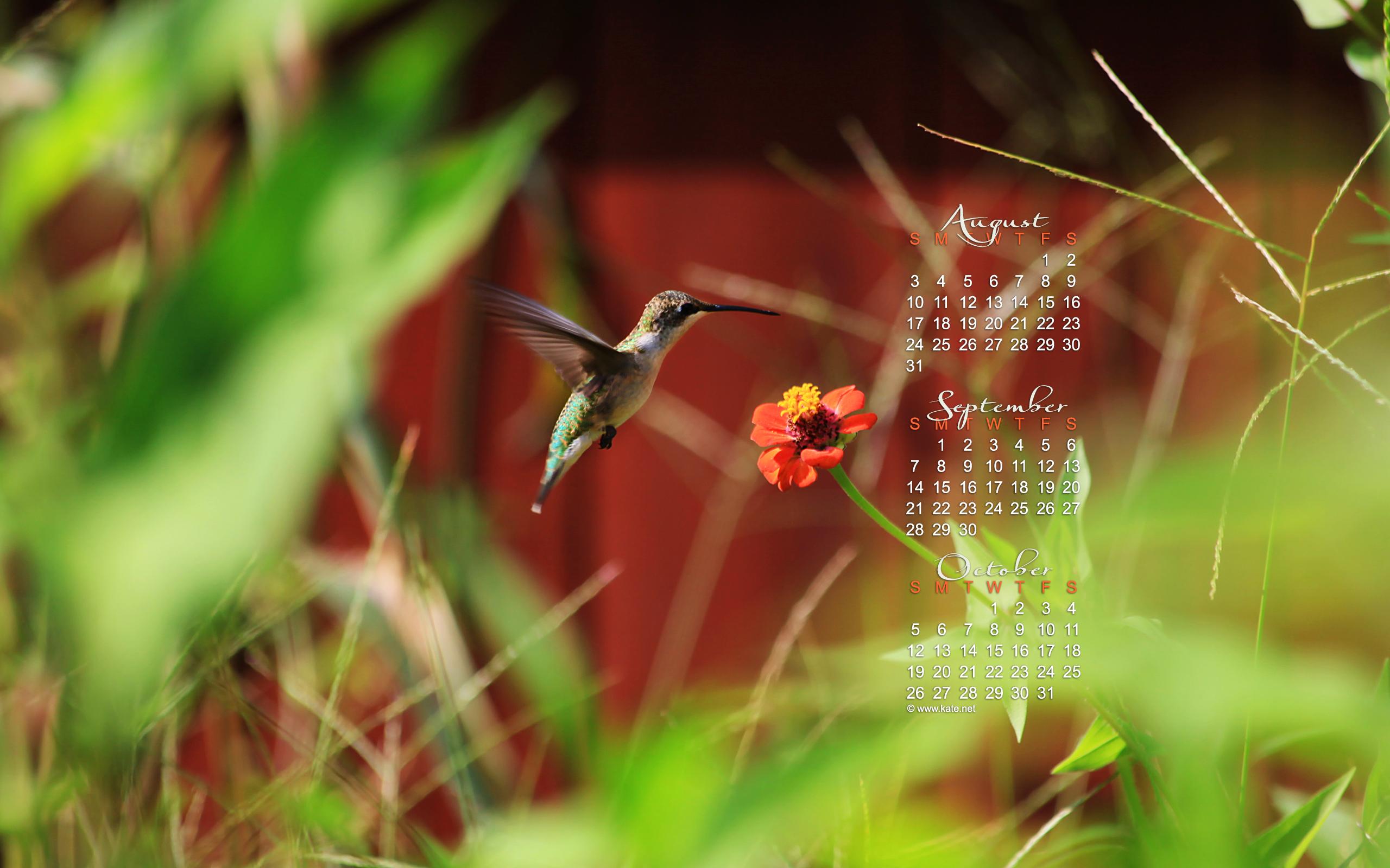 september calendar wallpaper hummingbird photo wallpaper kate net 2560x1600