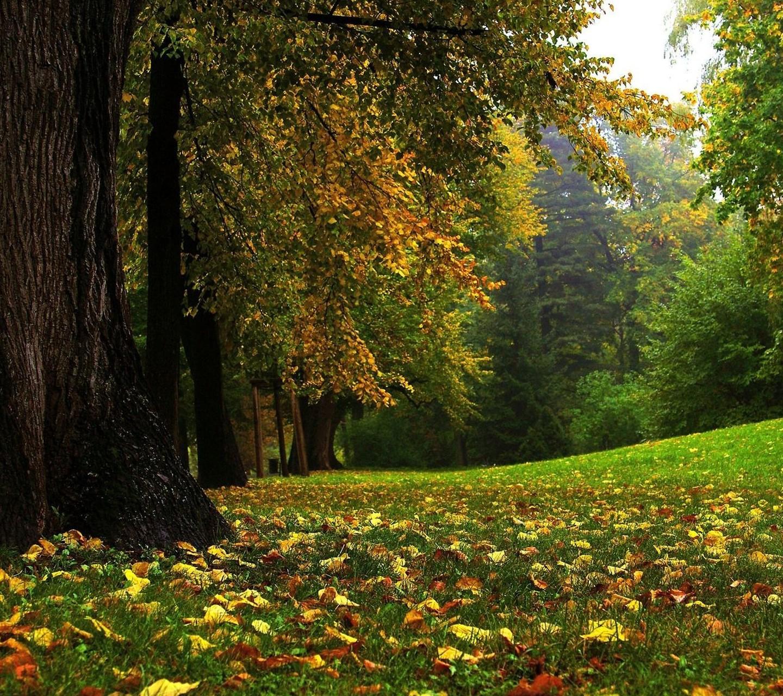 Green Desktop Wallpaper: Green Forest Wallpaper HD