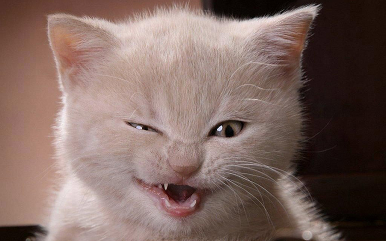 Cute Kitten   Kittens Wallpaper 16122951 1280x800