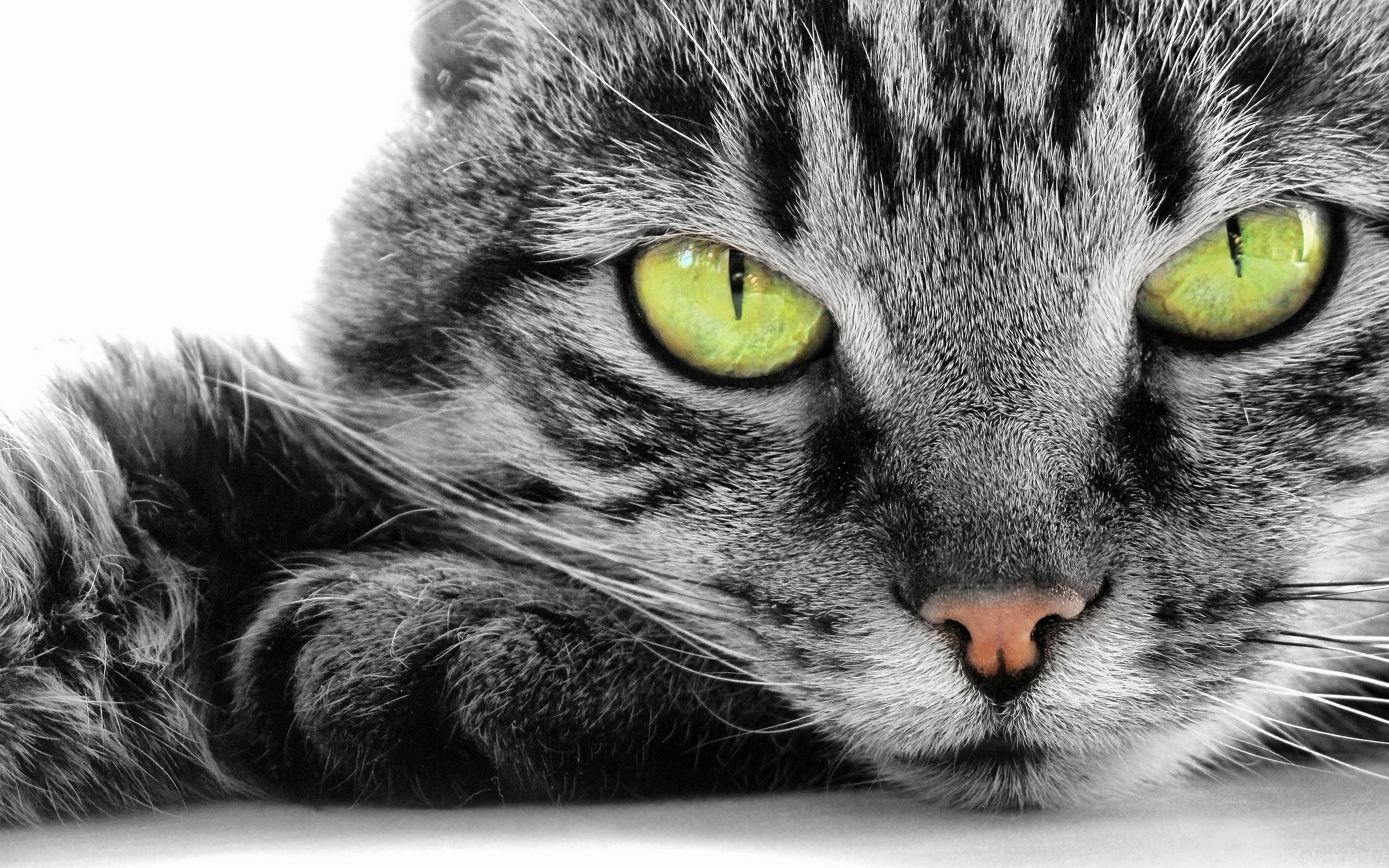 Cats hd Wallpapers 2560x1600