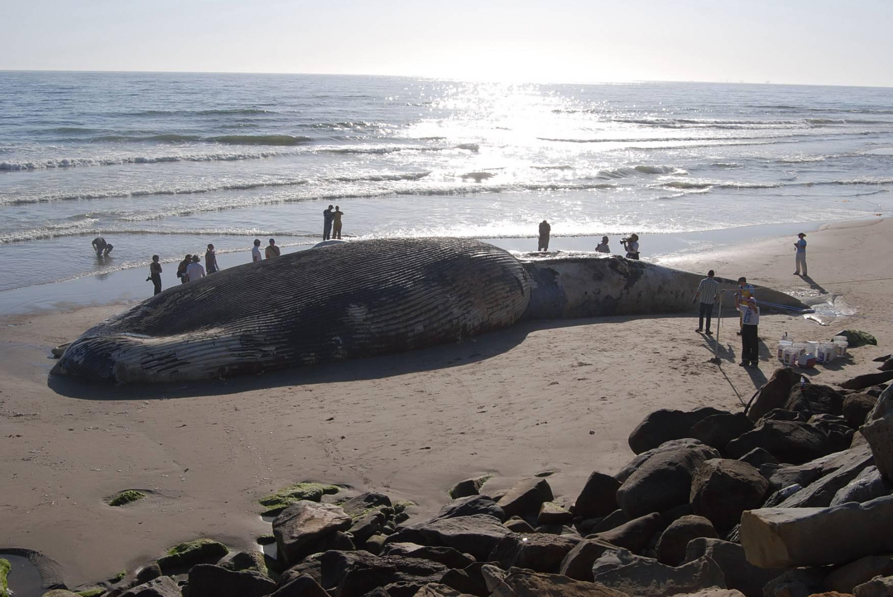 Beach whale rocks people wallpaper HQ WALLPAPER   2512 1750x1171