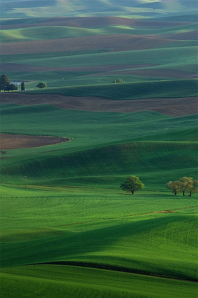 Green Green Meadow Wallpapers Wallpapersafari