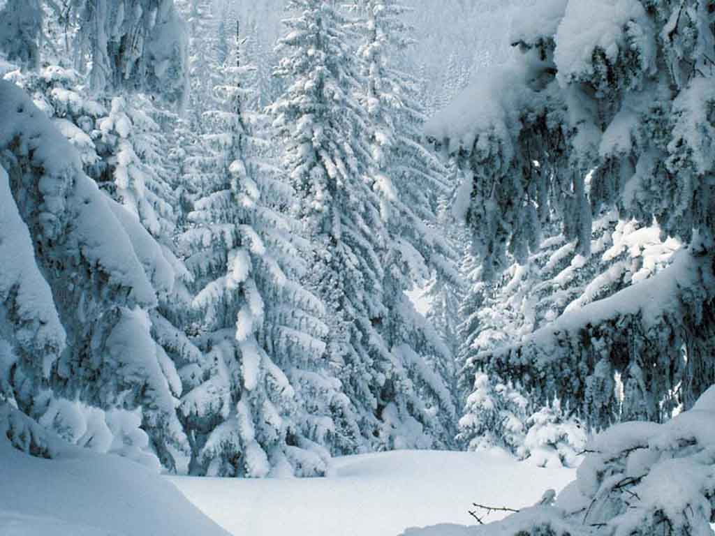Winter Scene Desktop Backgrounds 1024x768
