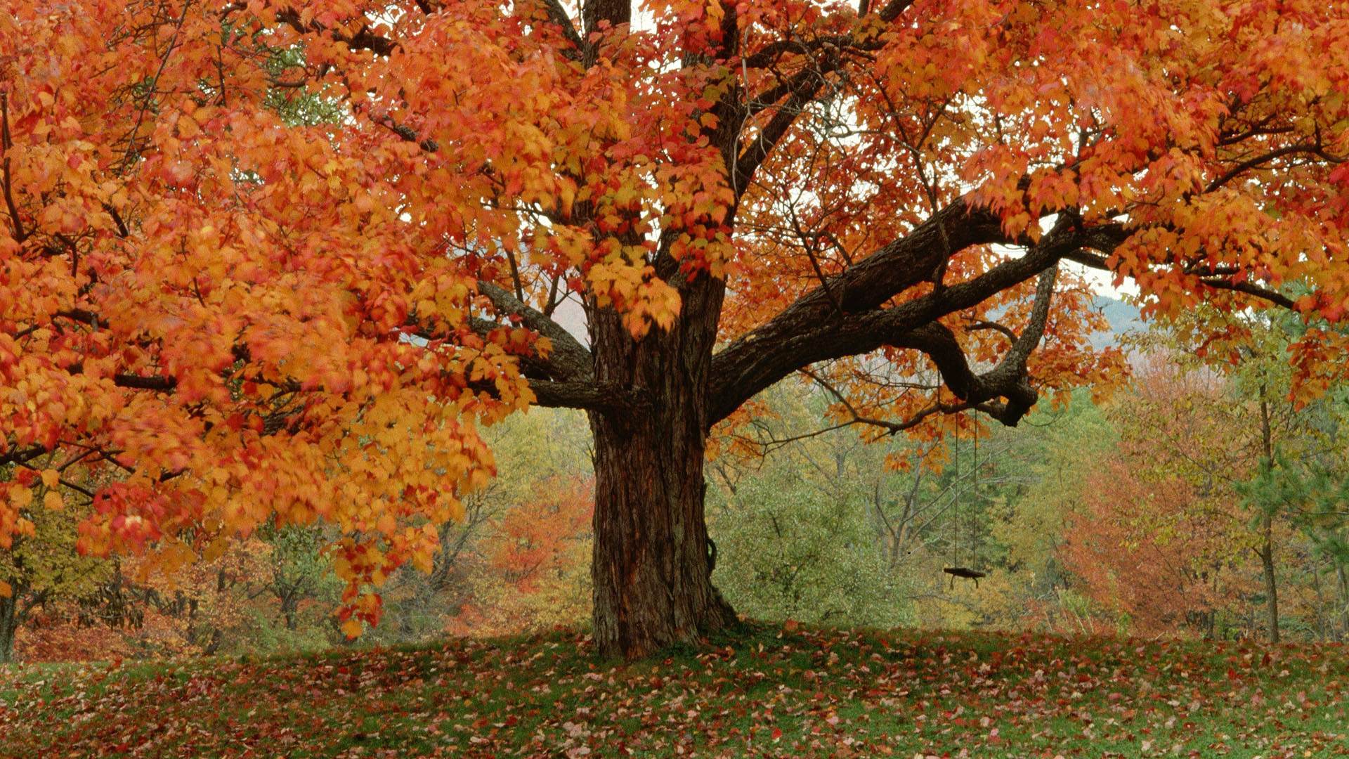 autumn trees wallpaper 1920x1080 1920x1080