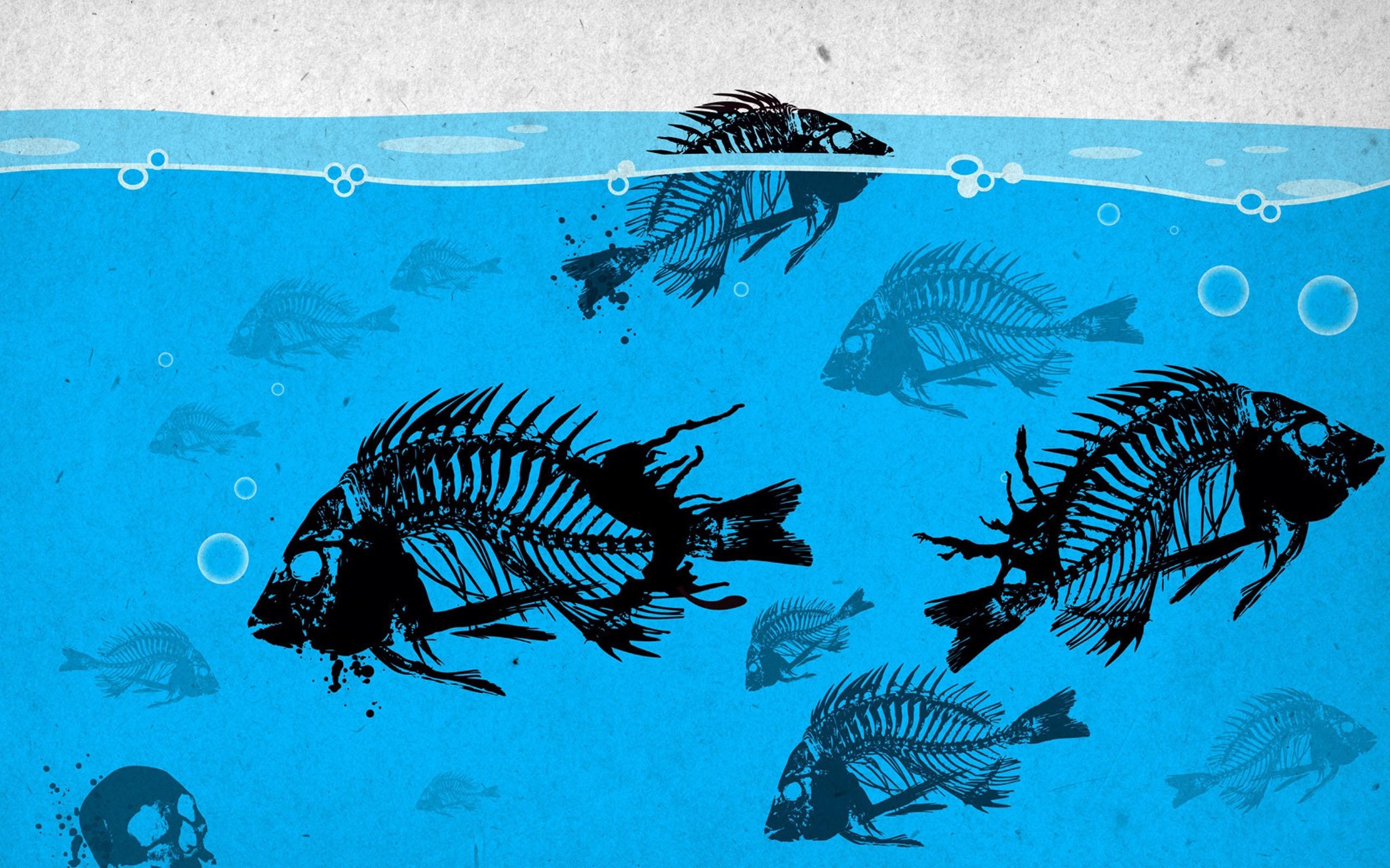 Bass Fishing Cartoon Wallpaper Newest fishing wallpaper 2560x1600