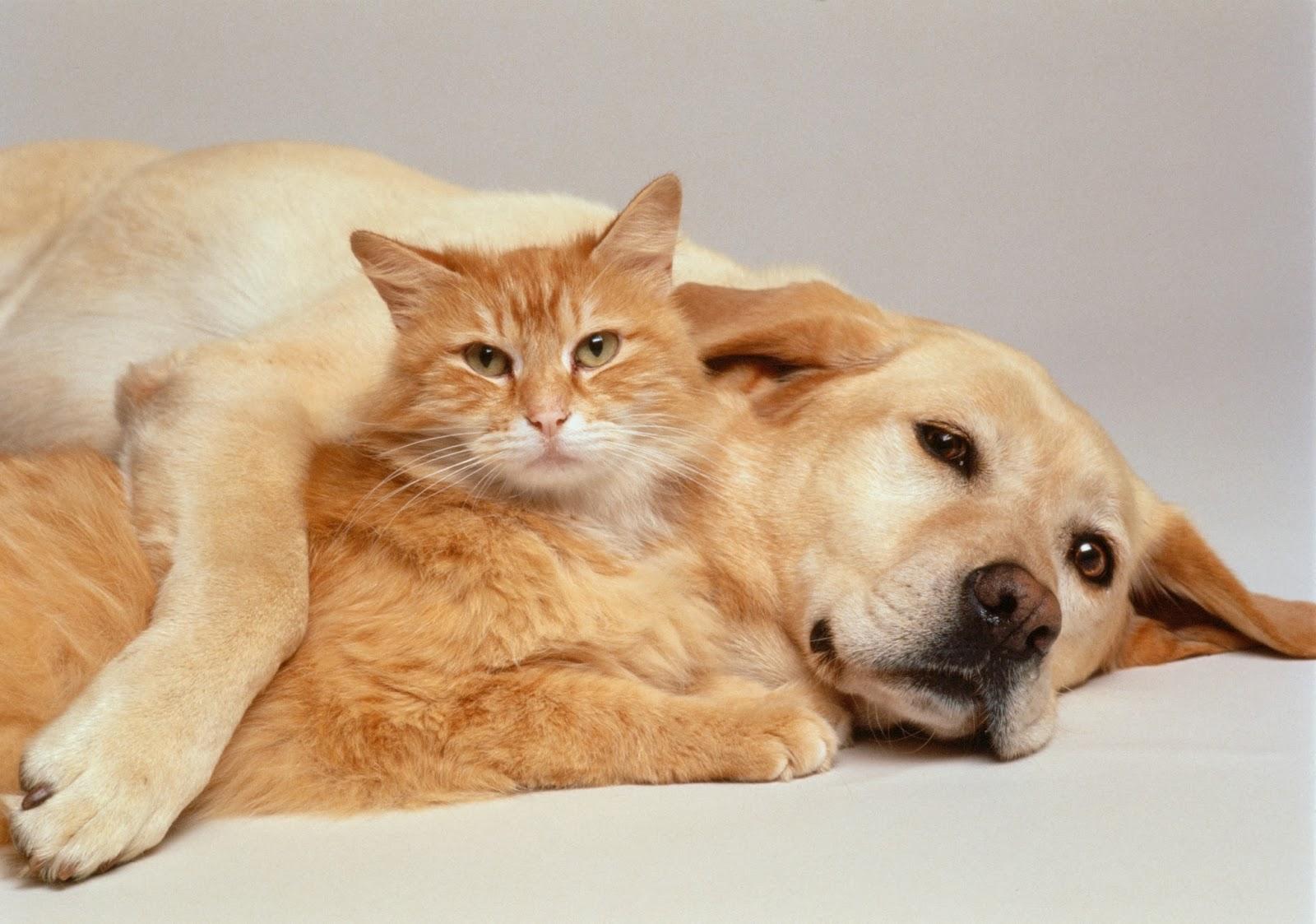 Cute Cat With Cute Dog Wallpaper for Desktop 1600x1123