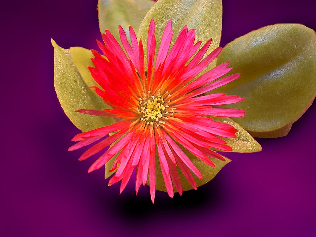 Diffe Types Of Flowers In India With Pictures And Names