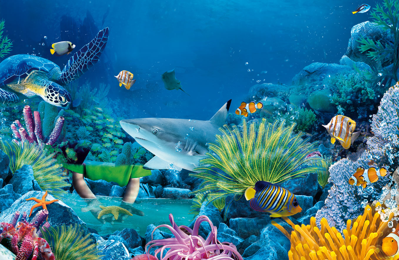 Sea Life HD Wallpapers Backgrounds 1357x883