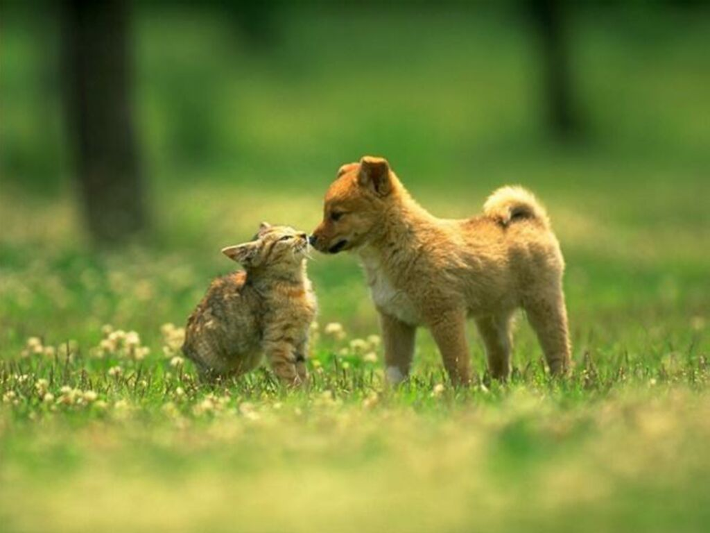 and cat want to love cat and dog in love 1024x768