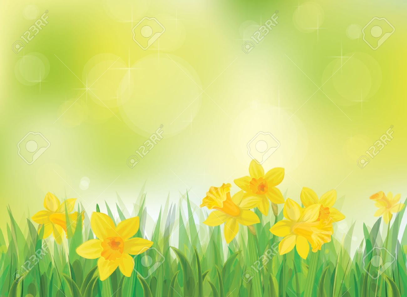 Vector Of Daffodil Flowers On Spring Background Royalty 1300x950