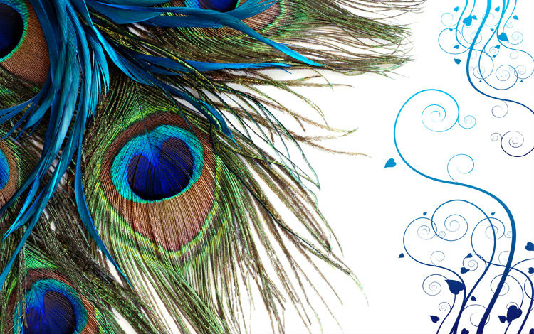 Luxury New Arrival Mural Wallpaper Peacock Feather tv wall background 750x470