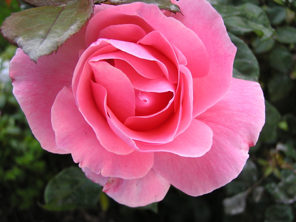 1024x768px pretty flowers wallpaper wallpapersafari pretty pink flower wallpaper high quality wallpapers 1024x768 izmirmasajfo