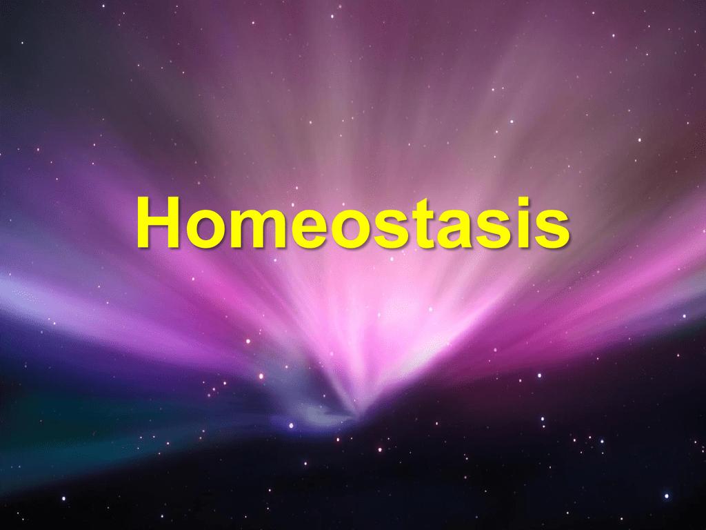 Homeostasis   NCEA Level 3 Biology 1024x768