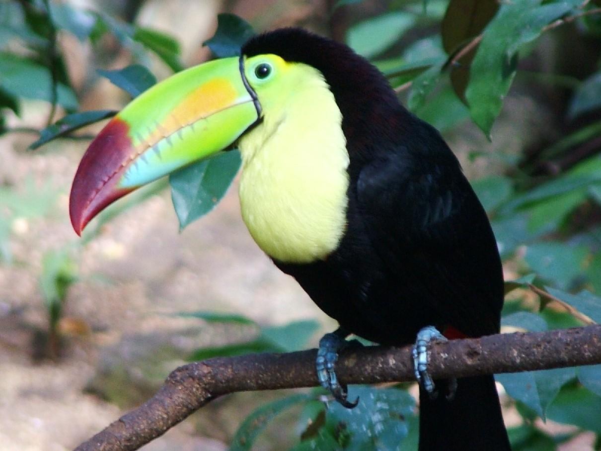 vogel 12 Tropical Birds Wallpaper Download HD 1210x907