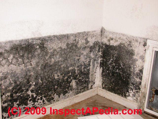 LPT How to get rid of mold on your bathroom ceiling LifeProTips 640x480