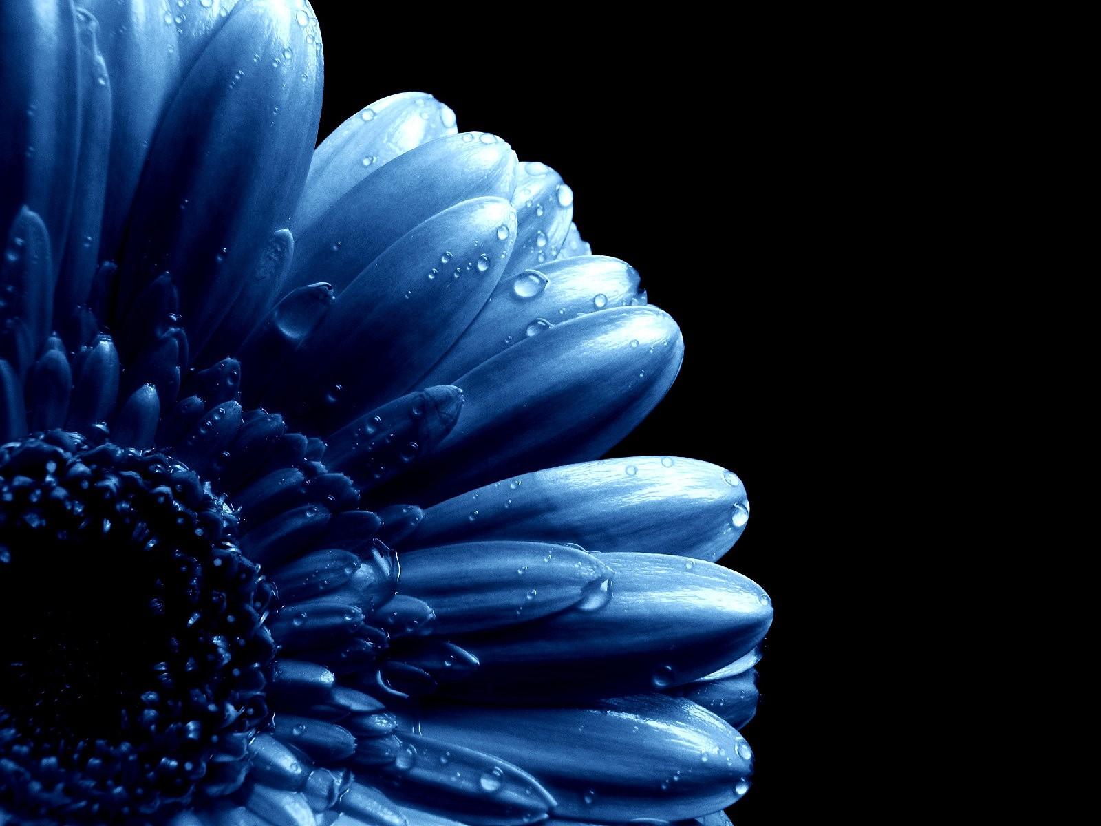 Hd flower wallpapers 1080p for desktop ImageBankbiz 1600x1200