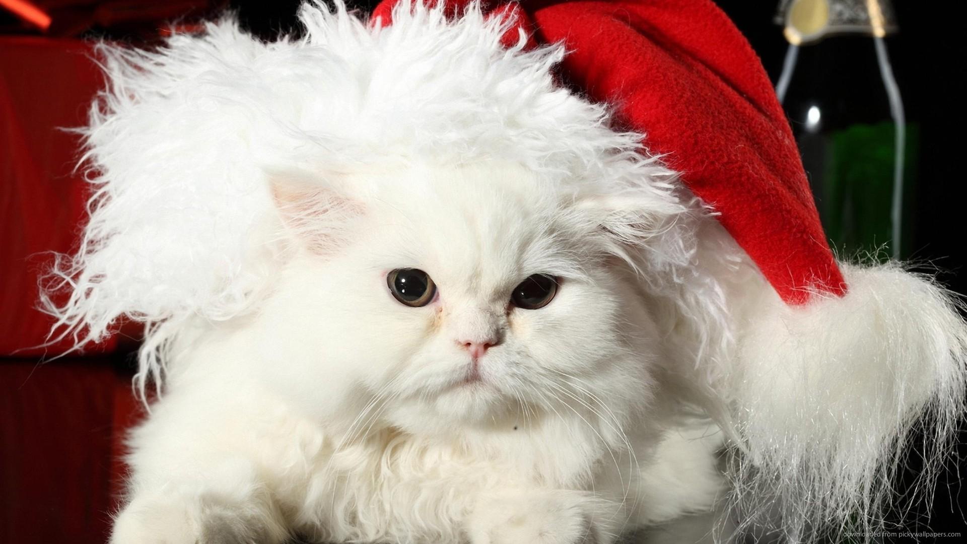 christmas wallpaper holidays cat white 1920x1080 1920x1080