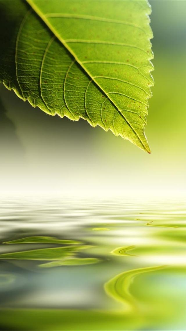 nature green wallpapers for iphone 5 640x1136 hd wallpapers for iphone 640x1136