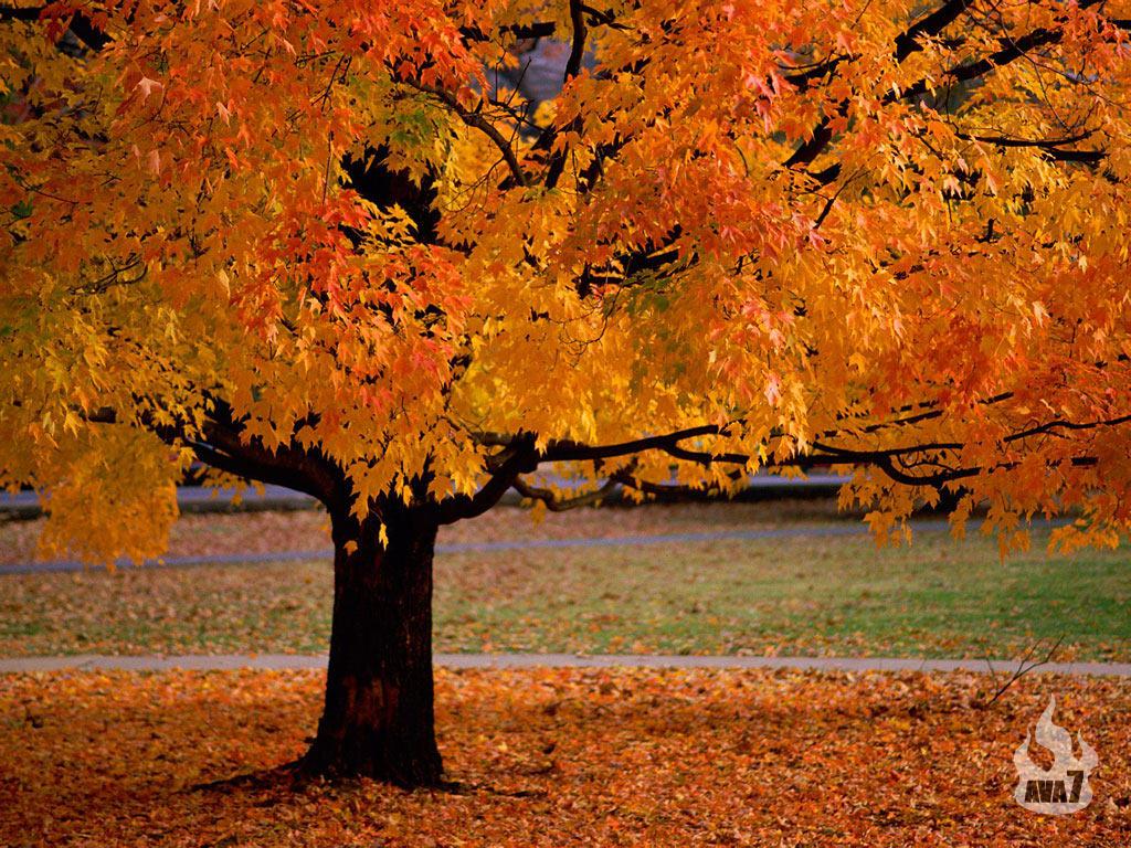 beautiful autumn season wallpaper hd beautiful autumn season wallpaper 1024x768