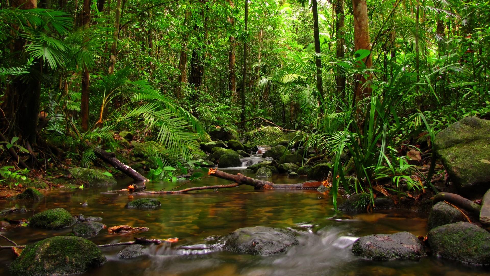Hd wallpaper jungle - Hd Wallpaper Jungle Nature Jungle Wallpaper 1920x1080 Nature Jungle