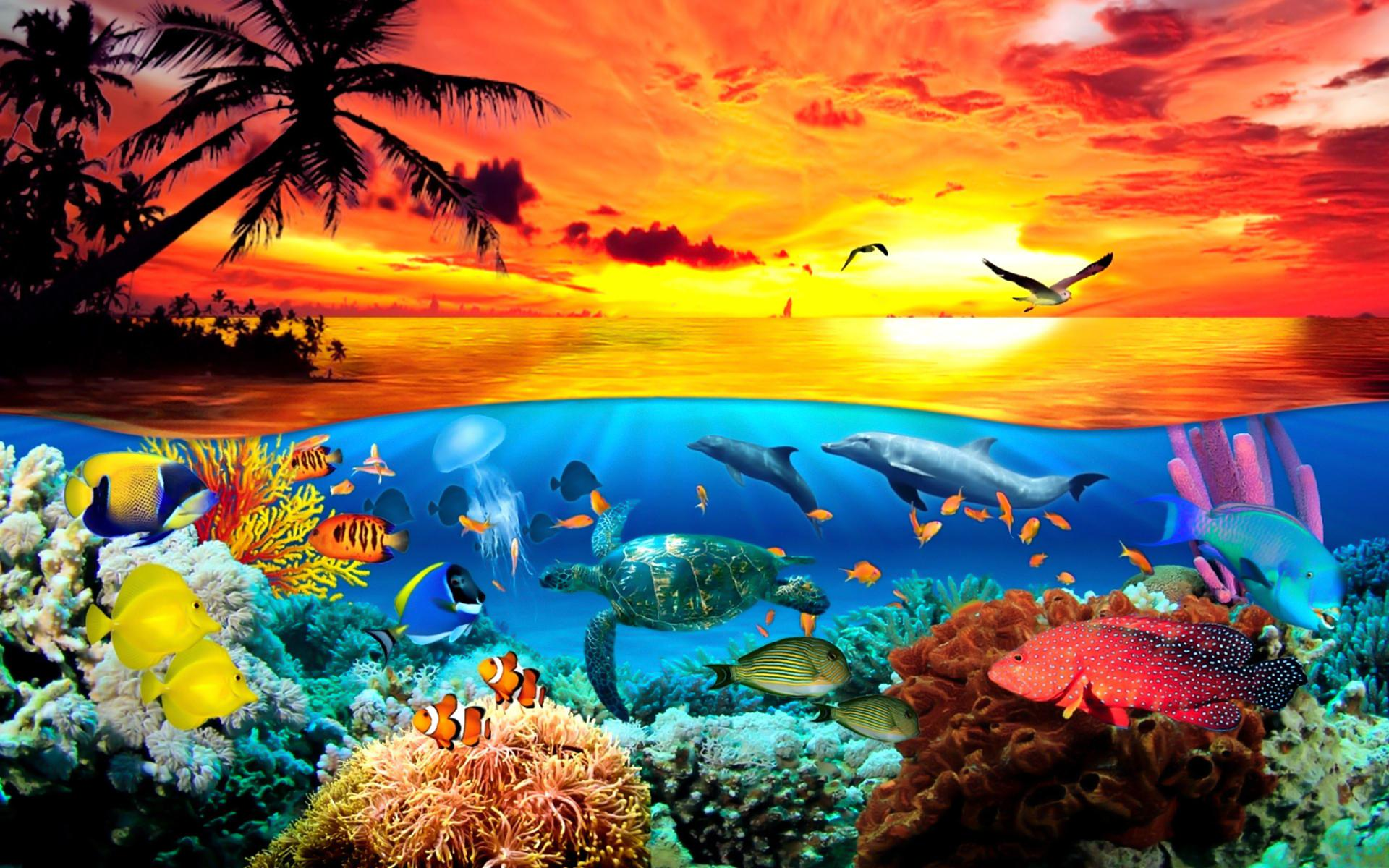 48 under the sea wallpaper on wallpapersafari - Ocean pictures for desktop background ...