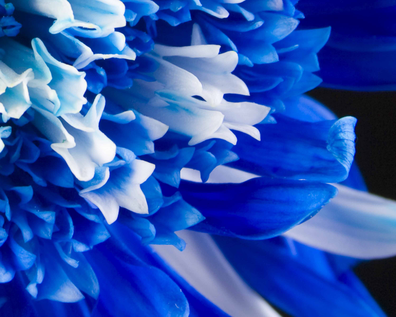 3000x2400px Blue Flower Wallpaper Wallpapersafari