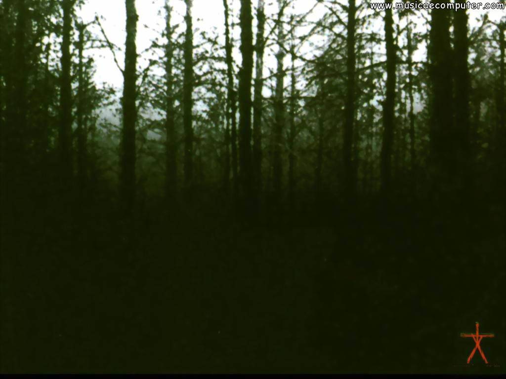 Desktop Wallpapers Movies The Blair Witch Project   Pic 1 6 Photos 1024x768