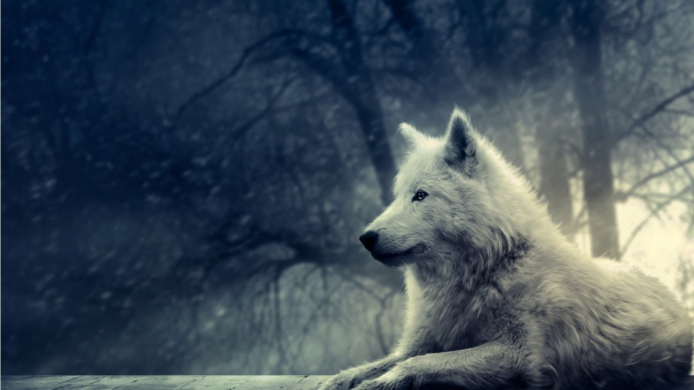 47 Animated Wolf Wallpaper On Wallpapersafari