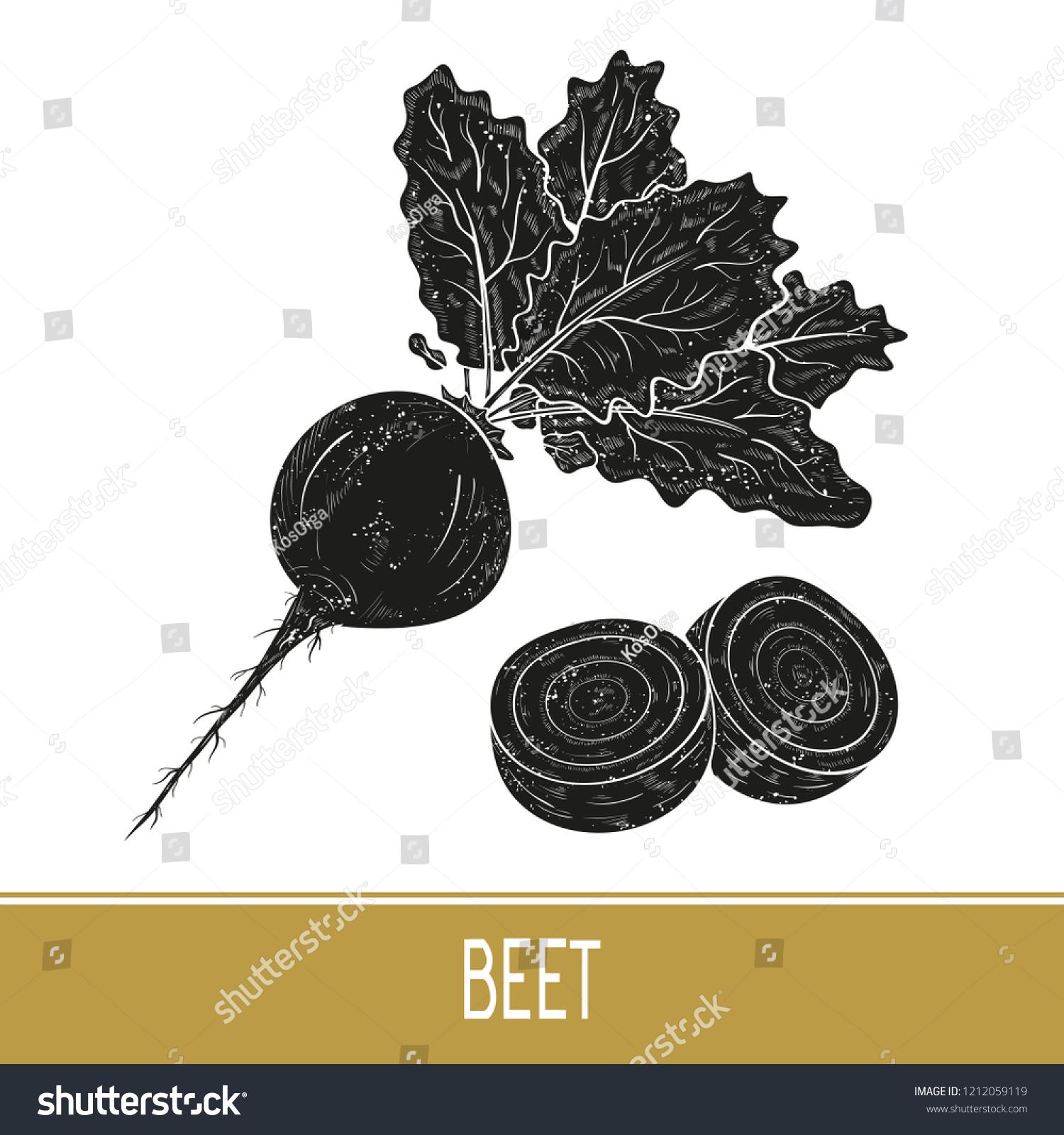 Beet Vegetable Root Fruit Leaves Black Stock Vector Royalty 1500x1600