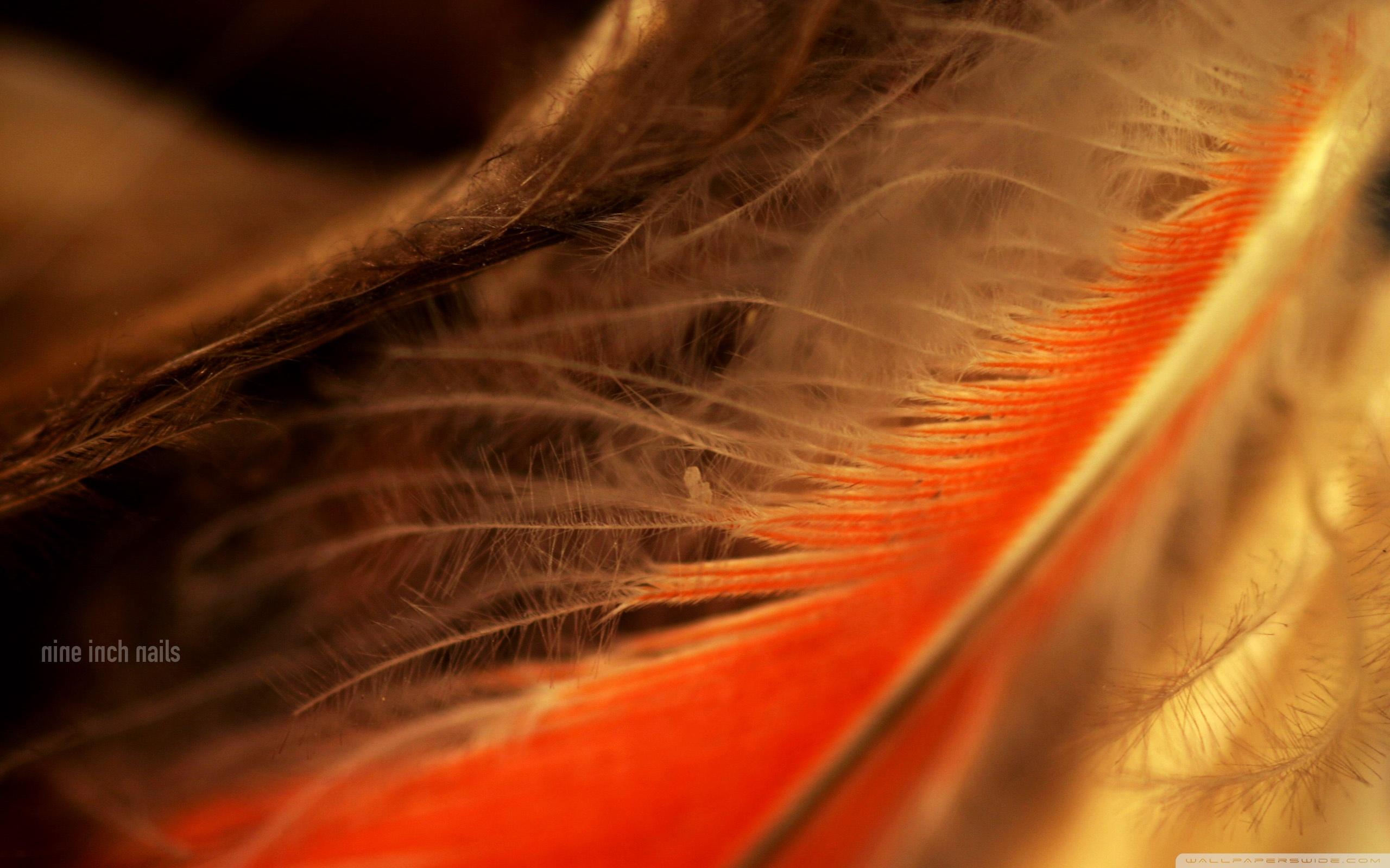 Orange Feather Macro 4K HD Desktop Wallpaper for 4K Ultra HD TV 2560x1600