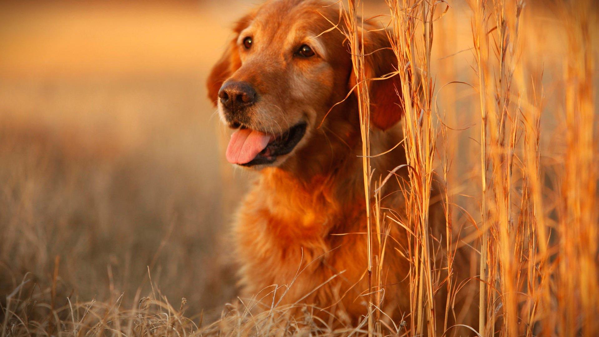 Beautiful Dogs Wallpaper HD - WallpaperSafari