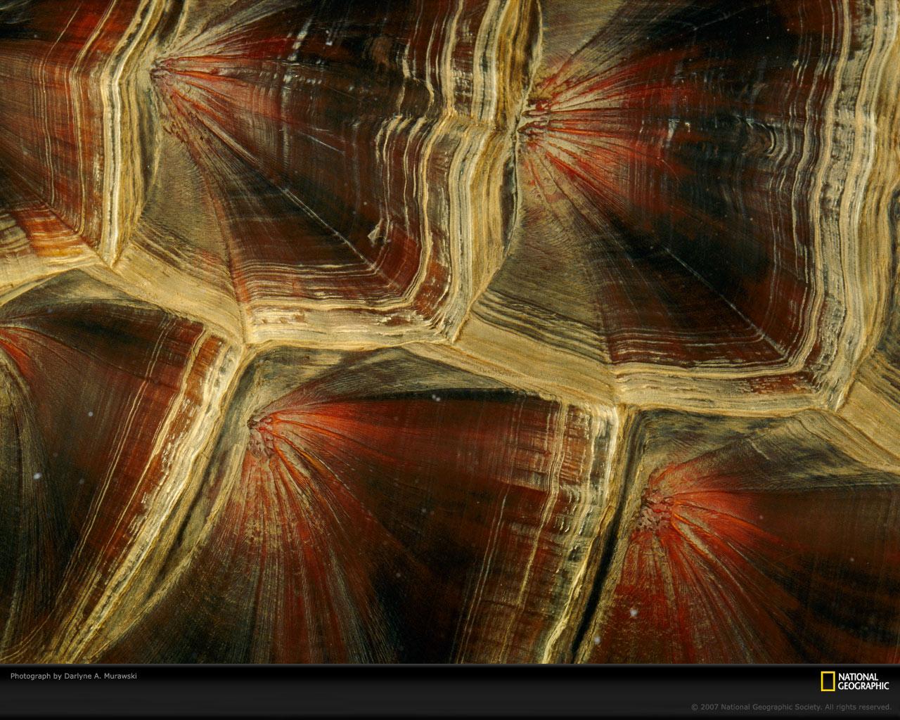 turtle shell pattern - HD1280×1024