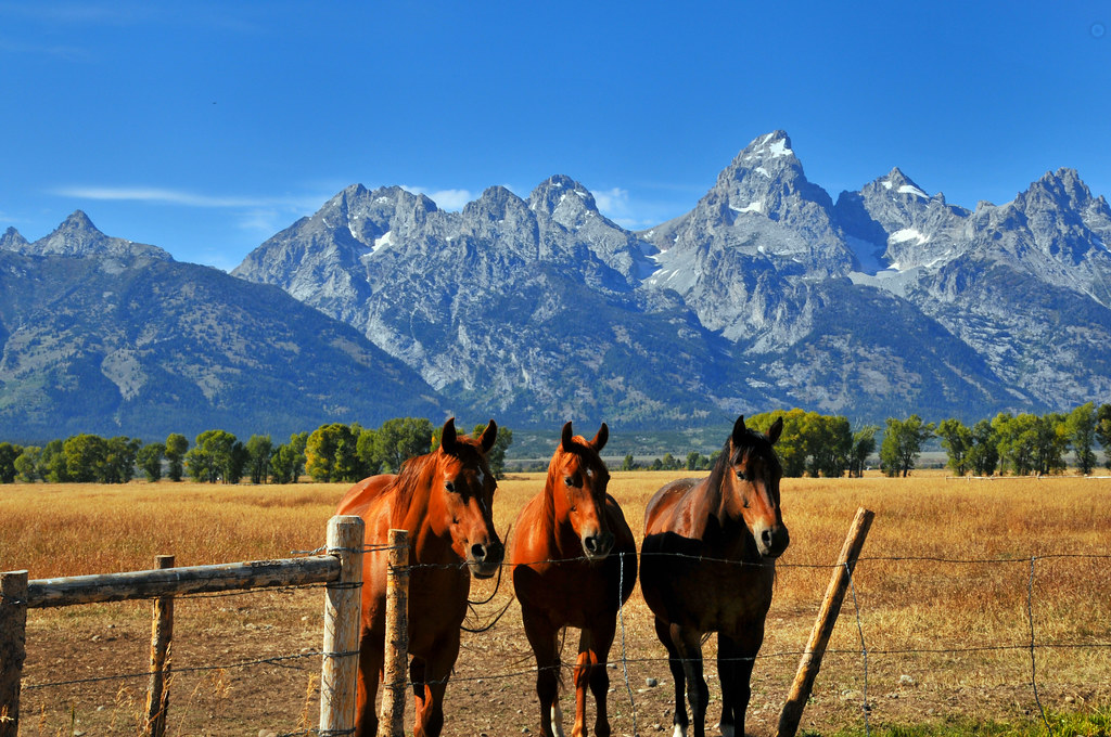 Horses with the Grand Tetons in the Background Ronnie Wi Flickr 1024x680