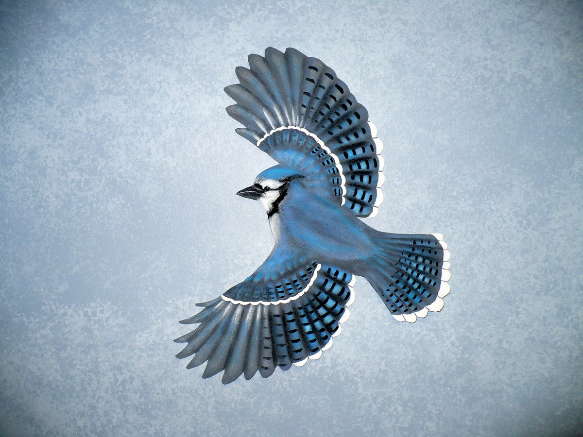 Cool Wallpapers blue jay wallpapers 1200x900