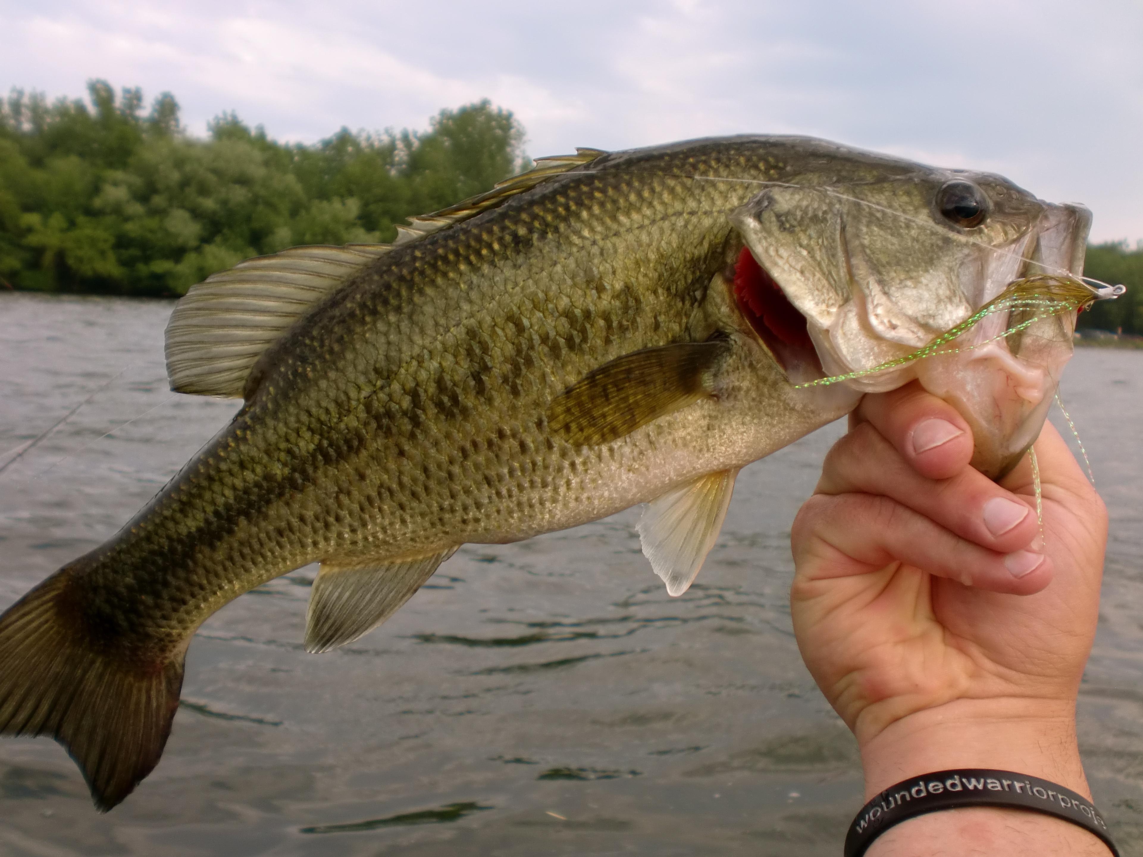 Pin Largemouth Bass Wallpaper Animaltrekcom Pictures on 3842x2882