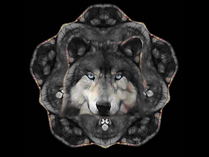 45 Wolf Wallpaper For Iphone On Wallpapersafari