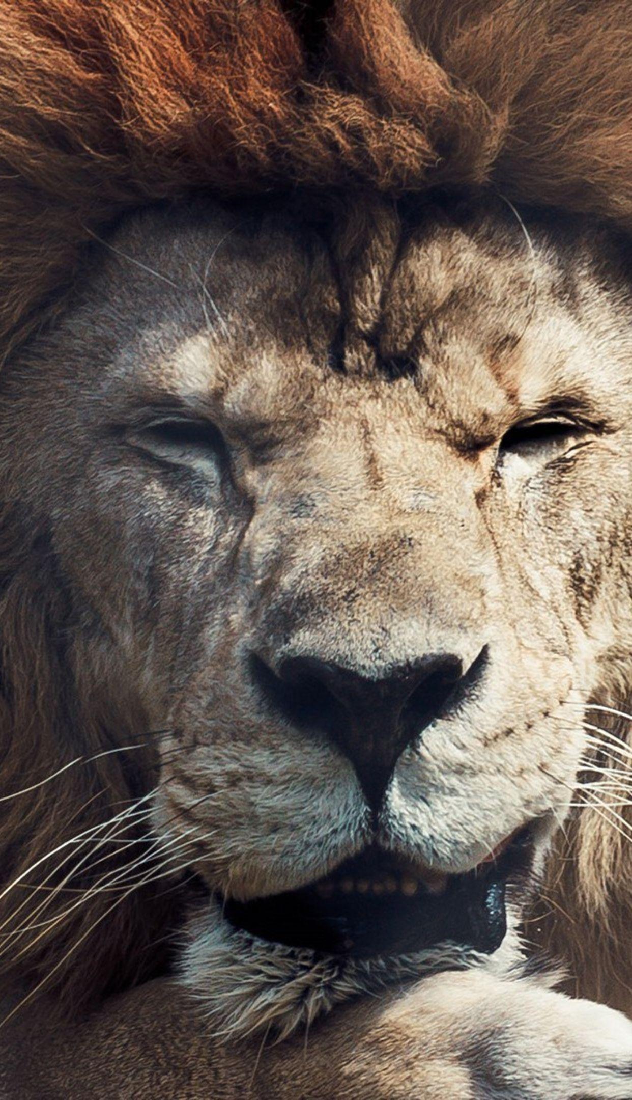Wallpprs Lion in the zoo 1242x2208 4k HD wallpaper wallpprscom 1242x2160
