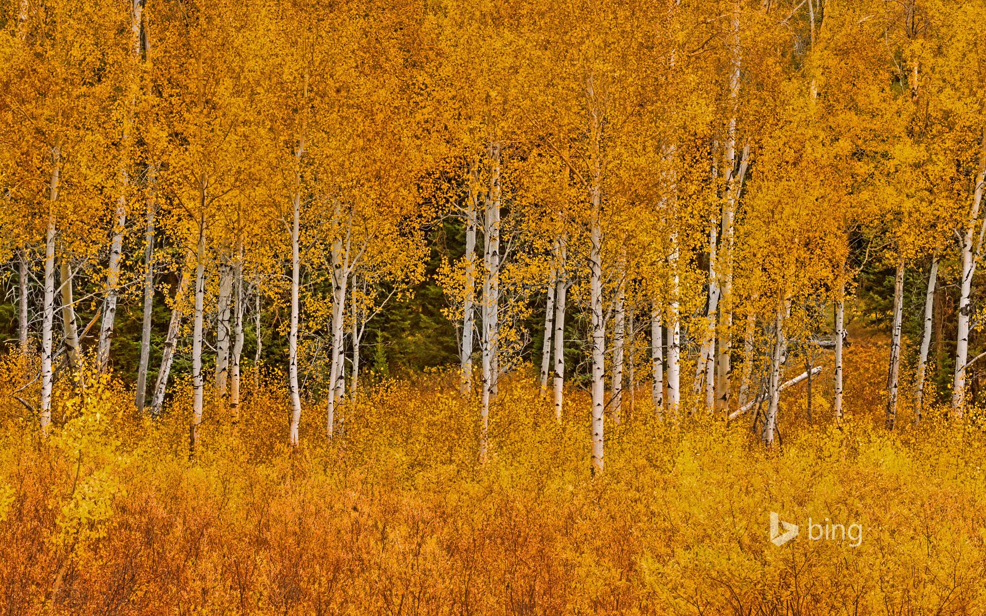 Autumn aspens in Grand Teton National Park Wyoming Matt 1920x1200
