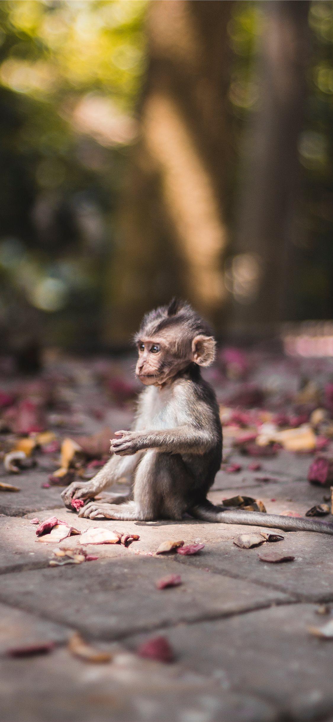 Baby monkey found in Sacred Monkey Forrest in Ubud iPhone X 1125x2436